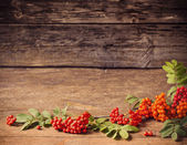 Ashberry on wooden background — Stock Photo
