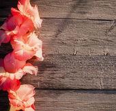 Gladiolus on wooden background — Stock Photo