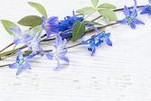 Vackra vårblommor på trä bakgrund — Stockfoto