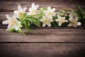 White flowers on wooden background — Stock Photo
