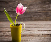 Pink tulip in yellow pot on wooden background — Stock Photo