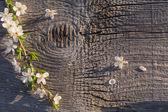 Fleurs sur fond en bois — Photo