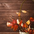 Autumn leaves — Stock Photo #47183467