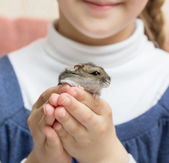 Hamster in child hands — Stock Photo