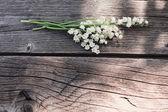 Beautiful may-lily flowers — Stock Photo