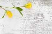 Twee gele rozen — Stockfoto