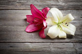 two flowers on wooden background — Stock Photo