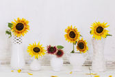 Sunflowers in vases on old white background — Stock Photo