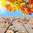 Autumn leaves walnut — Stock Photo