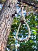 Gallows on a tree in a forest — Stock Photo