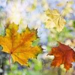 Fallen autumn leaves on wet from rain glass — Stock Photo