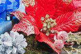 赤のポインセチア、クリスマスの花の装飾 — ストック写真