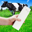 Empty milk carton with space for text and advertising in a lands — Stock Photo