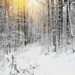 Rays of the sun seen through the trees in the winter forest — Stock Photo #14939921