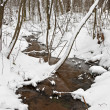 Stream flows in the winter woods — Stock Photo