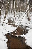 Kış ormanda dere akar — Stok fotoğraf