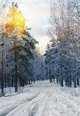 Puesta de sol y pista camino a través del bosque de invierno — Foto de Stock