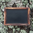 Blackboard hanging on the tree covered with moss — Stock Photo