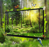 Forest Life shows on the TV screen — ストック写真