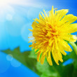 Dandelion on a background of blue sky - Stock Photo