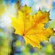Autumn leaves on wet from rain glass — Stock Photo