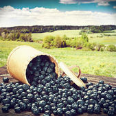 Blueberries in a basket is scattered on the table — Stock Photo