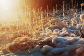 восход солнца в лесу утром — Стоковое фото
