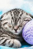 kitten sleeps on the tangles of yarn — Stock Photo