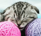 kitten sleeps on the tangles of yarn — Stock Photo
