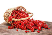 Basket of ripe juicy red currant  — Stock Photo