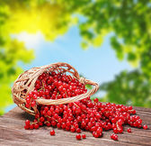 Red currant in a basket — Stock Photo