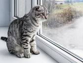 Cat sits on a windowsill   — Stock Photo