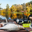 Fishing tackle and caught fish  — Stock Photo #49462911