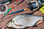 Caught fish and fishing tackle — Stock Photo
