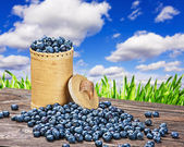 Blueberries in a basket is scattered   — Stock Photo