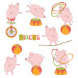 Set of cute circus little pig — Stock Vector #24712605