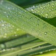Dew drop 2 — Stock Photo