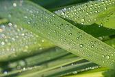 Dew drop 2 — Stock Photo