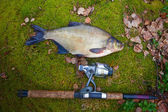 Bream from the far lake — Stock Photo