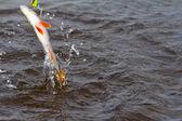 Perch fishing — Stock Photo