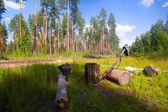 狩猟。木で休む — ストック写真
