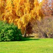 Autumn landscape — Stock Photo #12338701