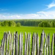 Summer landscape with fence — Stock Photo