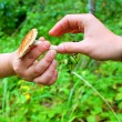 Pilz in der hand — Stockfoto #15691537