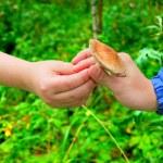 Pilz in der hand — Stockfoto