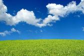 Field and sky landscape — Stock Photo