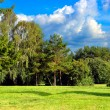 Summer Park Landscape — Stock Photo