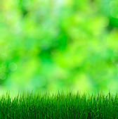 Grass On Blurred Background — Stock Photo