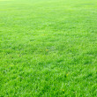 Empty Green Lawn — Stock Photo