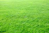 Césped verde vacío — Foto de Stock